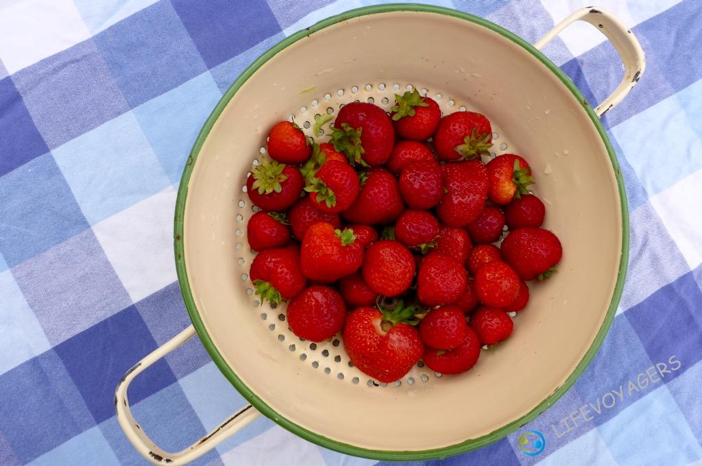 D_Erdbeeren