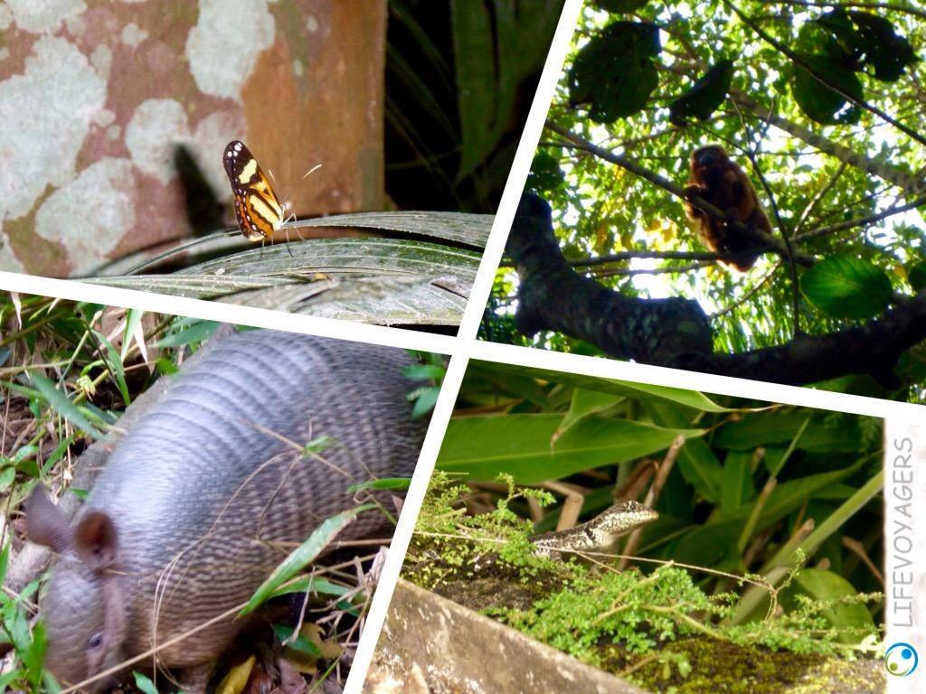 Jardin Botanico Tiere