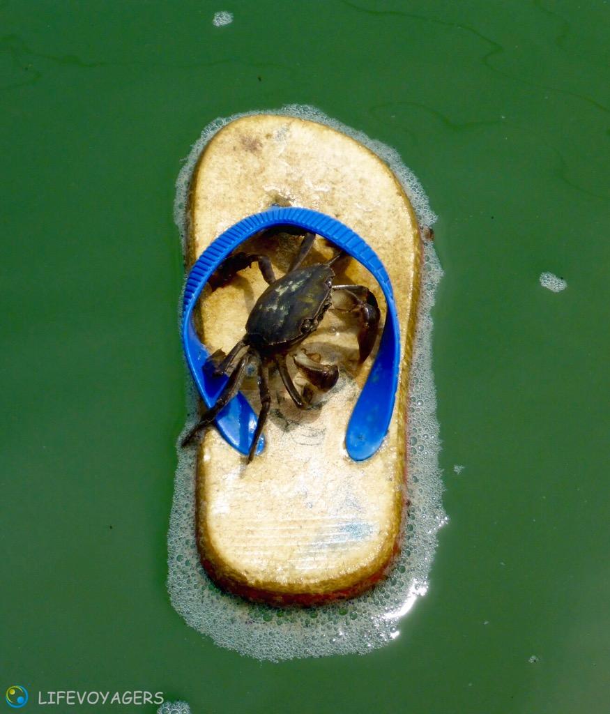 Krabbe auf Sandale