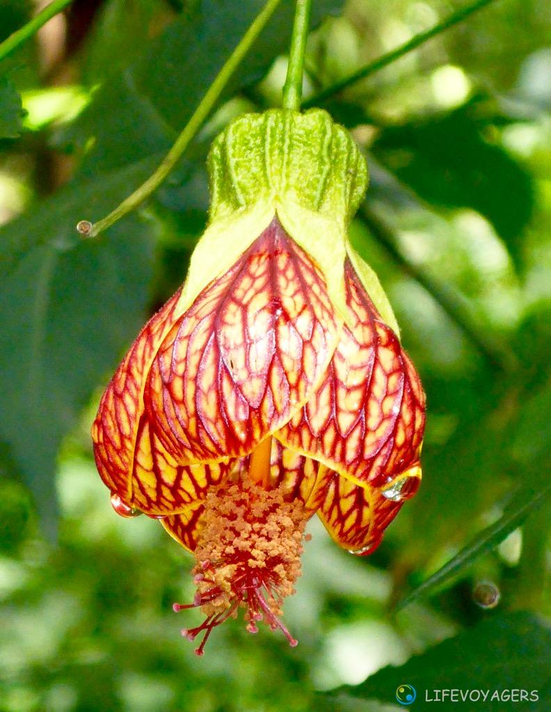 azz_jardin-botanico-iv-bluete