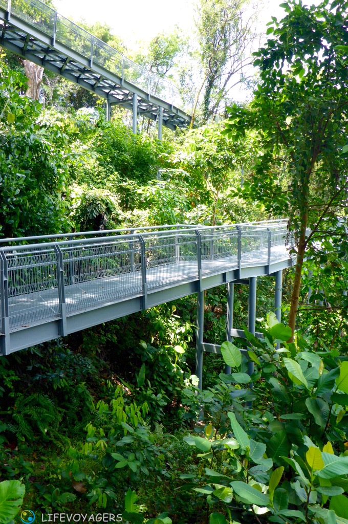 forest-doppelwalk