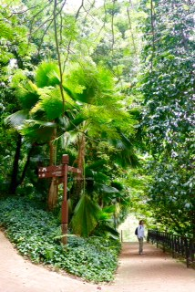 fort-canning-park_palms