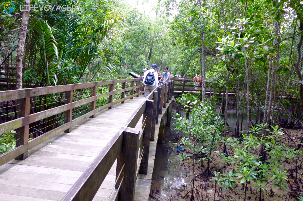 pasir-ris-mangroven-boardwalk