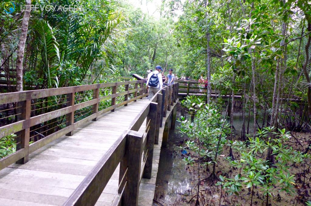 pasir-ris-mangroven-boardwalk